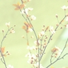 springRSlight.jpg